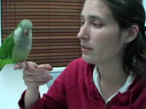 Attempted Potty Training Video - Quaker Parrot