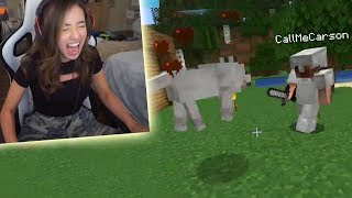 I killed Pokimane's dogs in Minecraft...