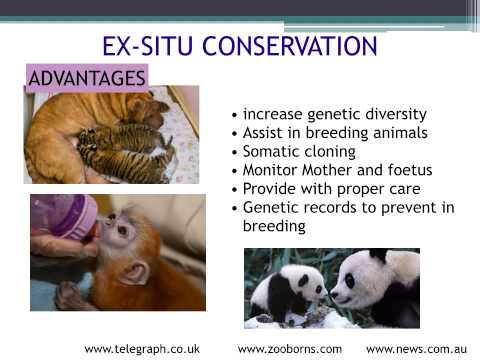 A level. Biodiversity and conservation. Methods of protecting endangered animals
