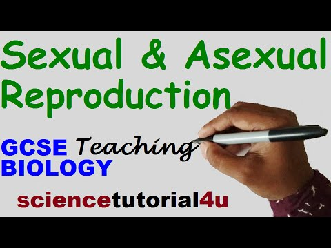 Sexual and Asexual Reproduction. GCSE Science Biology