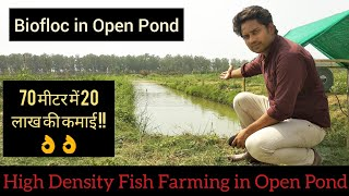 9 9 Kamfa Flowerhorn Fish For Sale In India