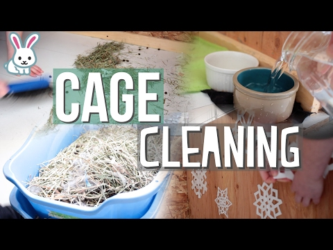 Cleaning The Rabbit Cage