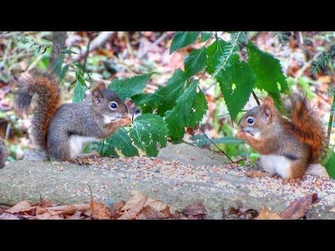 Talking Baby Squirrels