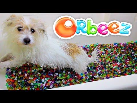 Orbeez Dog Bath Party Spa!