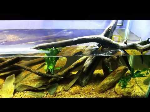 Algae Control: Brown Diatoms and Green Hair Algae