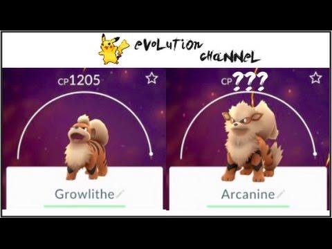 HUGEE Arcanine !!!! Pokemon Go  Growlithe(1200!!) Evolution