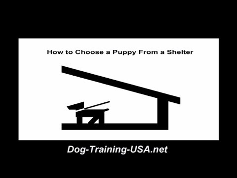 How to Choose a Puppy From a Shelter
