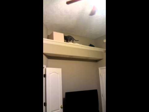 My Cat Climbing Wall Stairs / Shelves