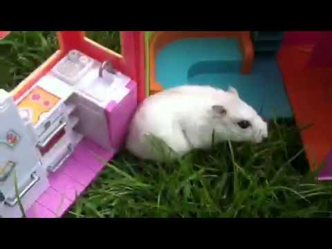 Casper playing outside