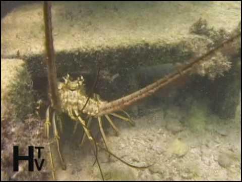 Florida Keys Illegal Lobster Condos Part1-WATERWAYS