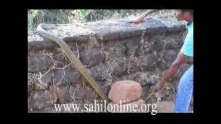 SahilOnline: Bhatkal Engineering student Misbahul Haque catching 8ft snake