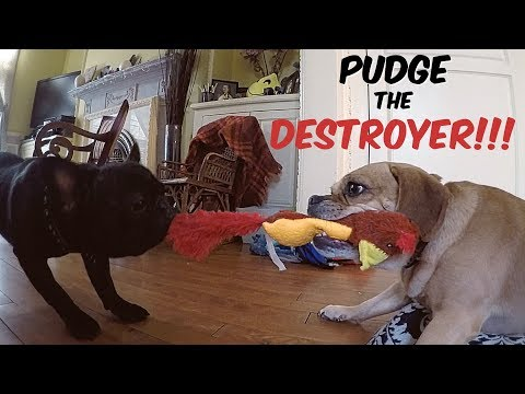 PUDGE THE DESTROYER!!! NO MERCY!!!