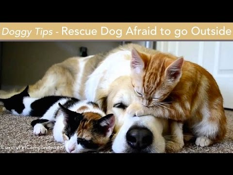 Rescue Dog Afraid to Go Outside - Dog Training Tips