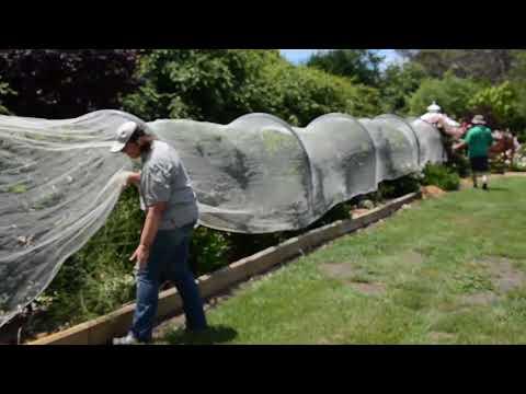 Netting Fruit Trees