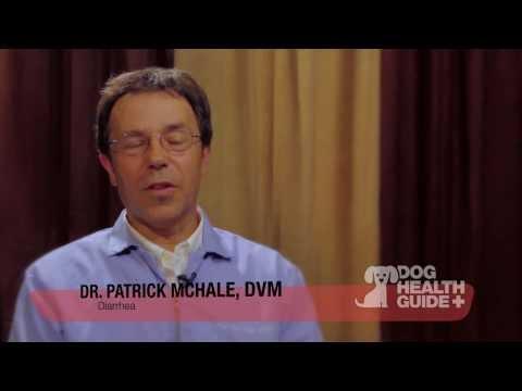 Dog Diarrhea Treatment Tips
