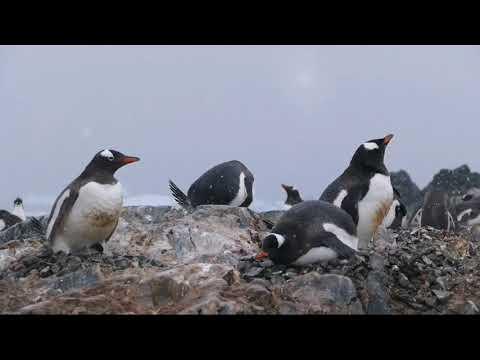 2017.12.16~2018.1.3 ANTARCTIC(二) South Shetland Island  & Antarctic Peninsula