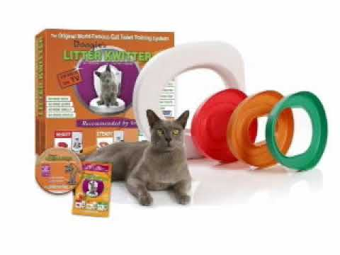How to potty train your cat