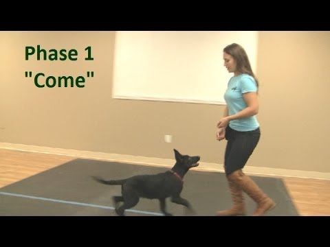 Best way to teach a puppy to come when called  (K9-1.com)