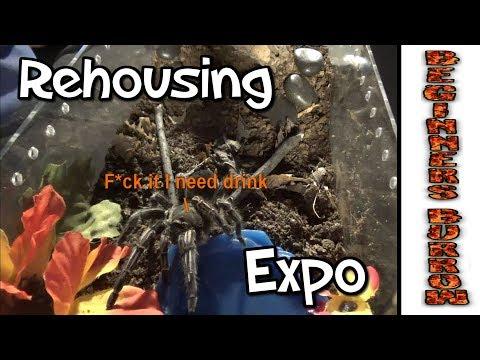 Tarantula Expo / Giveaway  - Beginners Burrow