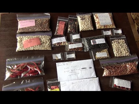 Heirloom Seeds (How to collect and store)