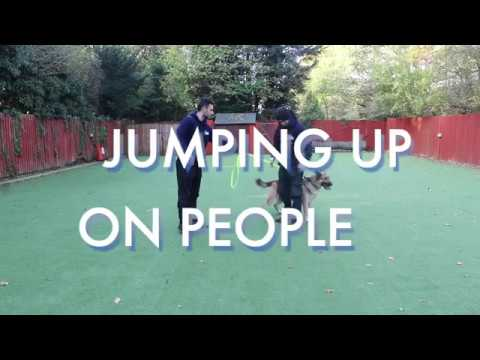 How to stop you dog from jumping up