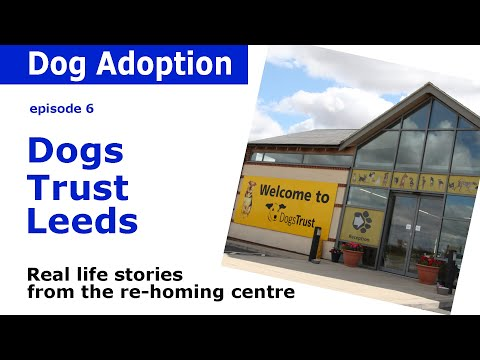 Dogs Trust Leeds | Behind the scenes stories of dog adoption | Episode 6