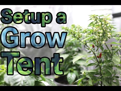 How to Setup a Indoor Grow Room