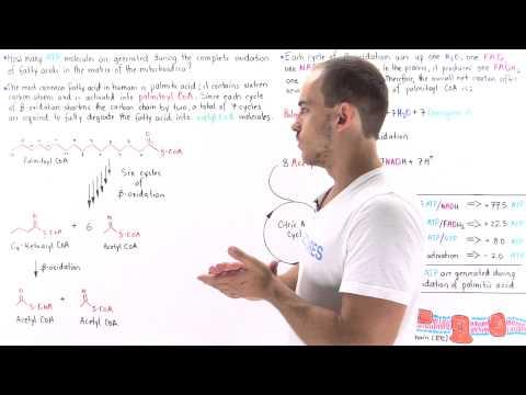ATP Yield in Fatty Acid Oxidation