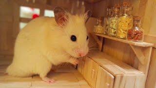 Tiny Hamster in his Tiny Kitchen I