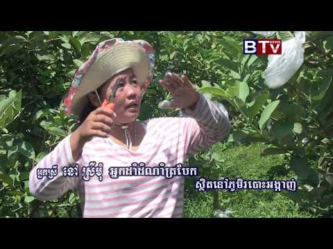 AGRICULTURE PROGRAM_Guava fruit 02 - PakVim net HD Vdieos Portal