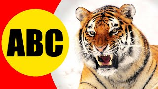 ALPHABET ANIMALS for Children - Learn ABC with Animals for Kids, Preschoolers and Toddlers