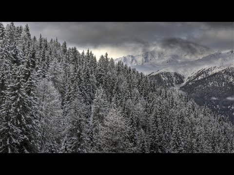 Some Trees Might Slow Climate Change Better Than Others - Newsy