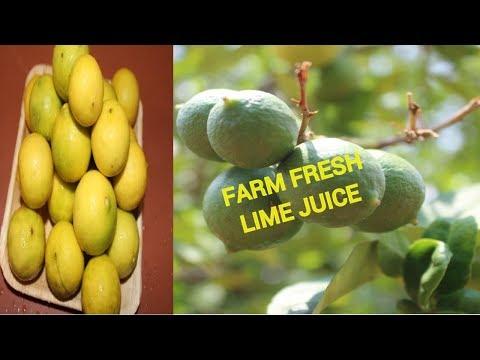 FARM FRESH LEMONADE   HEALTHY LIME JUICE   SUMMER SPECIAL   HEALTHY VILLAGE FOOD