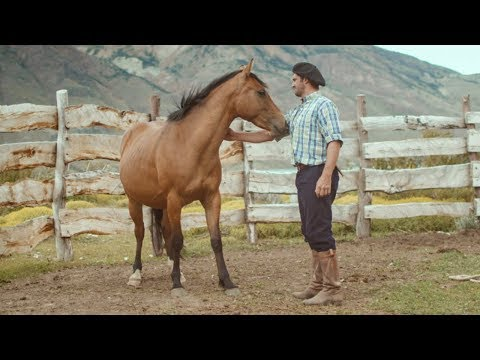 Wild Patagonian horse is masterfully tamed | Wild Patagonia | BBC Earth
