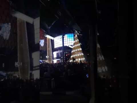 Mayward @ pandora christmas tree