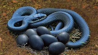 ऐसे सांप आपने पहले कभी नहीं देखे होंगे।। It looked like a normal snake until someone got close to it