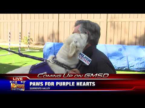 KUSI Good Morning San Diego's Dave Scott Teases Paws for Purple Hearts with Delta