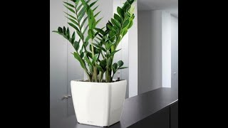 Does this un-killable house plant need any care ?