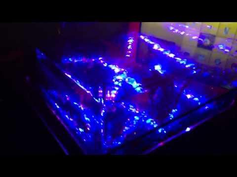 Fish Tank Coffee Table Table Aquarium 675 High Def