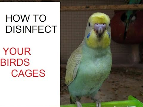 how to disinfect cages / cage ko germs free kesy kary