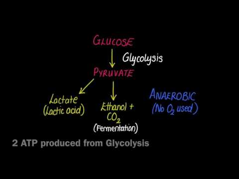 2.8 Anaerobic Respiration