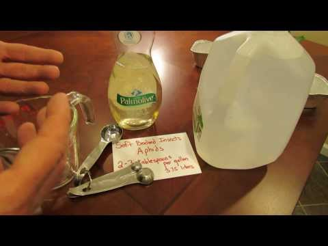 For New Gardeners: How to Make Soapy Spray for Soft Bodied Garden Insects - MFG 2014