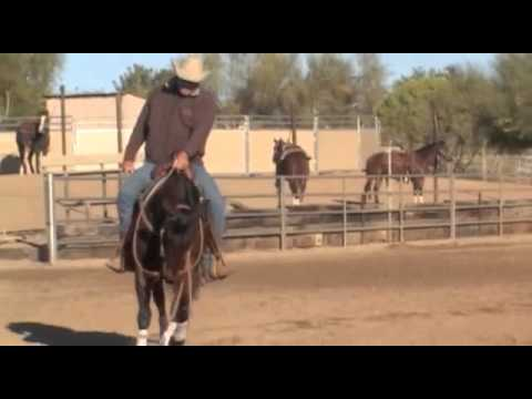 S2/T16: Bump Horses Head Down