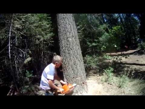 HOW NOT TO FELL A TREE, near death experience for his son taking video!