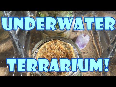Underwater Terrarium!