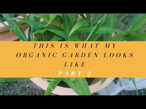 This is what my Organic garden look like Part 2