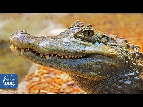 Fearest Crocodiles - Tourism vs Extinction 7