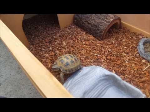 Awesome Tortoise / Box Turtle Setup at LLLReptile