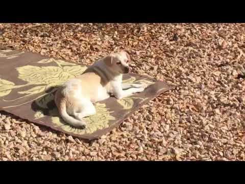Bella working on her tan.