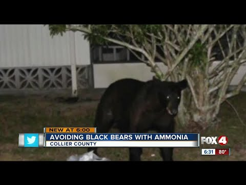Collier man has cheap solution to bears getting in trash: use ammonia